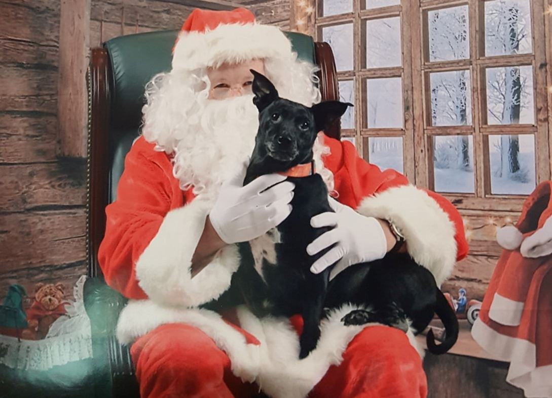 Santa with a dog on his lap